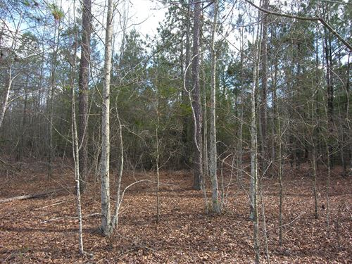 37.05 Acres ,Owner Financing : Blythe : Burke County : Georgia
