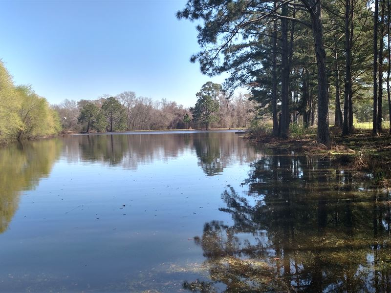 Country Home With Pond And 42 Acres : Sycamore : Turner County : Georgia