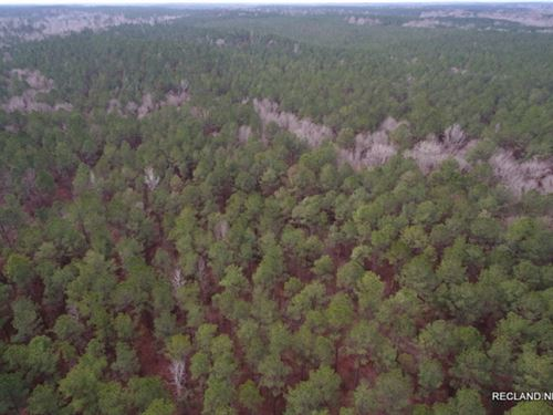 80 Ac, Managed Pine Timberland &Am : Vernon : Jackson Parish : Louisiana