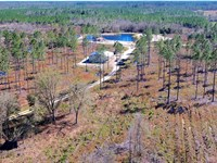 Timber And Hunting Land In Madison : Madison : Madison County : Florida