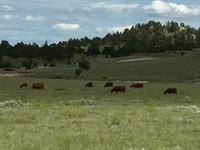 Hat Creek Breaks Ranch : Lusk : Niobrara County : Wyoming