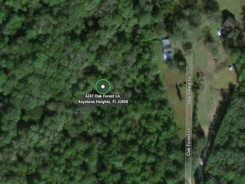6.2 Acres In Keystone Heights, FL : Keystone Heights : Clay County : Florida