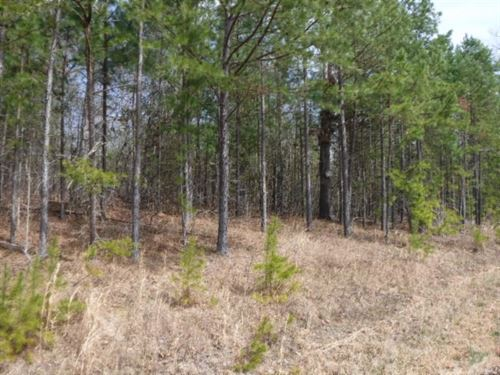 9.86Ac Totally Wooded Sunbright Tn : Sunbright : Morgan County : Tennessee