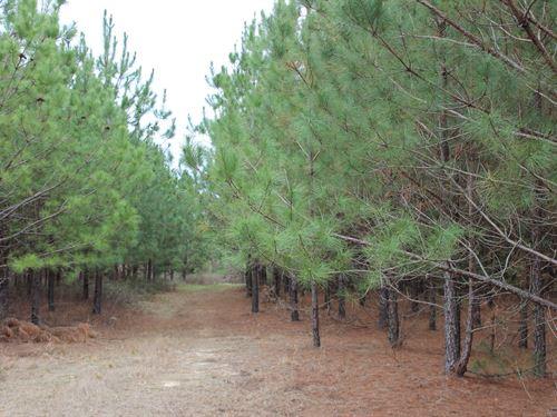 Recreational And Timber Property : Oglethorpe : Macon County : Georgia