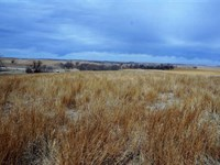 273 Acre Pasture Land North Centra : Glade : Phillips County : Kansas