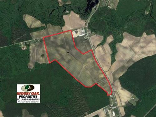 Under Contract, 130 Acres of Prim : Trenton : Jones County : North Carolina
