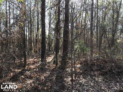 Sand Road Hunting Tract : Fosters : Tuscaloosa County : Alabama