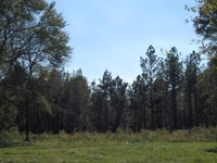 37 Acres Ginn Road : Magnolia : Pike County : Mississippi