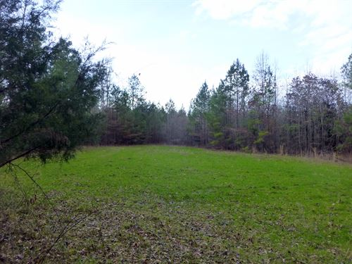 66-086 Allenton Tract : Pine Apple : Wilcox County : Alabama