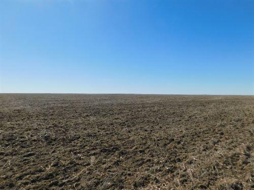 Anton/Arriba Dryland Auction : Anton : Washington County : Colorado