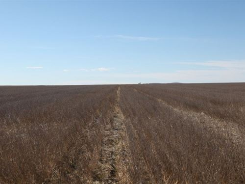 Sedgwick County Dryland & Pastu : Ovid : Sedgwick County : Colorado