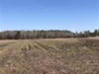 Farmland For Sale Beaufort County : Pinetown : Beaufort County : North Carolina