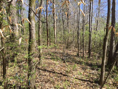 43-028 Stillwell Tract1 : Salem : Lee County : Alabama