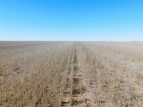 Dryland For Sale-The Richardson Fa : Cope : Washington County : Colorado