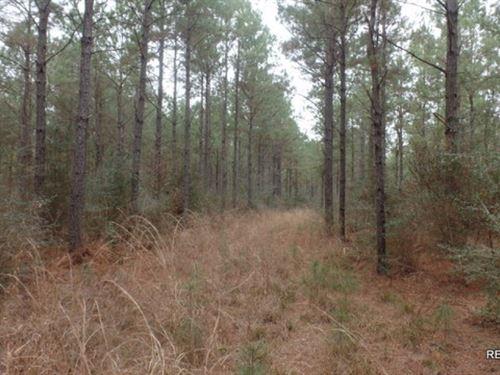 371 Ac, Timber Invest Tract : Kountze : Hardin County : Texas