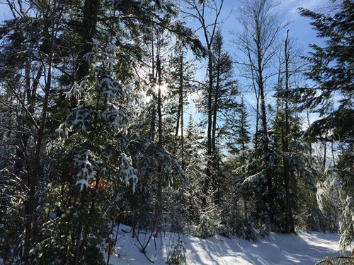 East Shore Forest : Embden : Somerset County : Maine