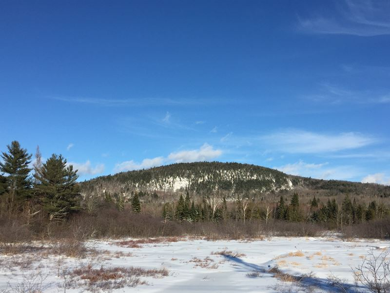 Fletcher Hill Forest : North New Portland : Somerset County : Maine