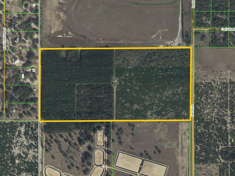 84.6 Acres Near Hamlin West : Winter Garden : Orange County : Florida