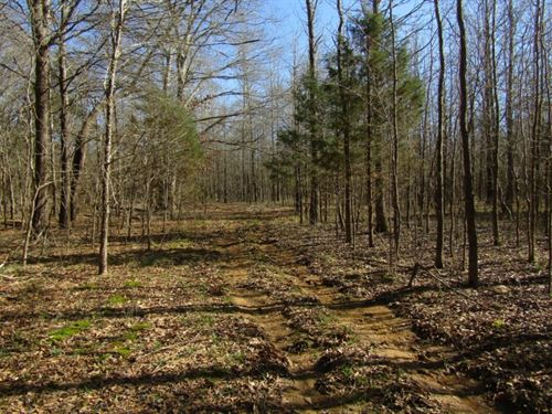 39.39 Acres In Panola County : Como : Panola County : Mississippi