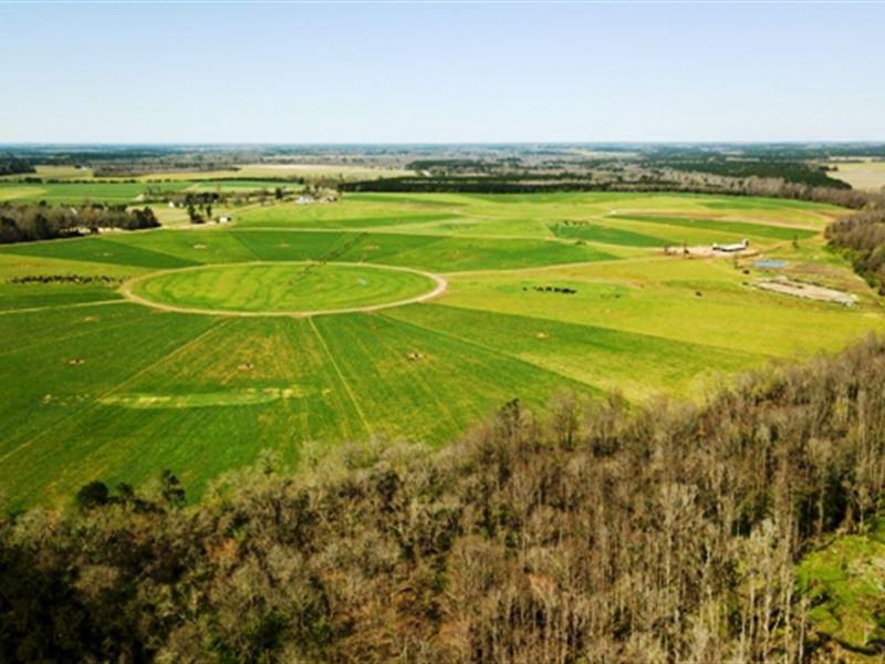 Adams Road Dairy : Stapleton : Jefferson County : Georgia