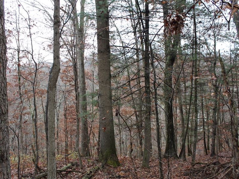 Old Camp Rd, 11 Acres : New Matamoras : Washington County : Ohio