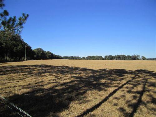 Watson Farm : Trenton : Gilchrist County : Florida