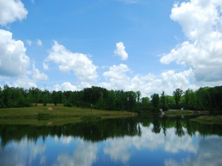 203 Acre Tyger River Tract : Woodruff : Spartanburg County : South Carolina