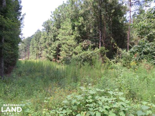 14.2 Acre Rankin Co Land : Star : Rankin County : Mississippi