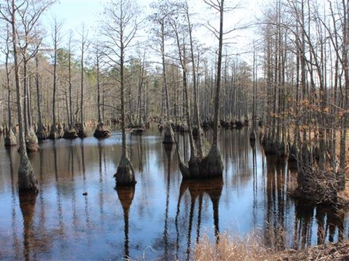 47.68 Acres - Chesterfield Co, Sc : Patrick : Chesterfield County : South Carolina