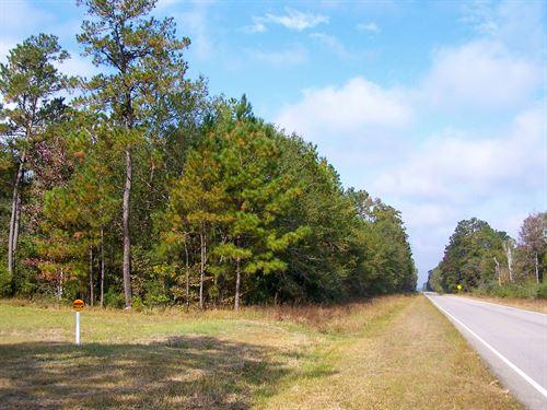 45 Ac Tract 3 Saratoga Timberlands : Saratoga : Hardin County : Texas