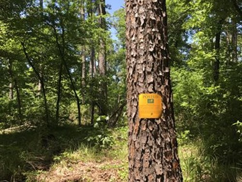 Hunting Land / Nature Preserve : Negley : Red River County : Texas