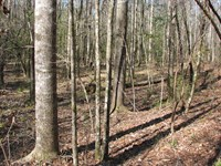 Great Hunting And High Value Timber : Georgiana : Butler County : Alabama