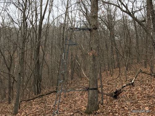 139 Ac - Recreational & Timber : Climax Springs : Camden County : Missouri