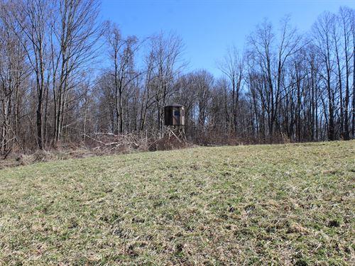 Beagle Club Rd - 10 Acres : Scio : Harrison County : Ohio