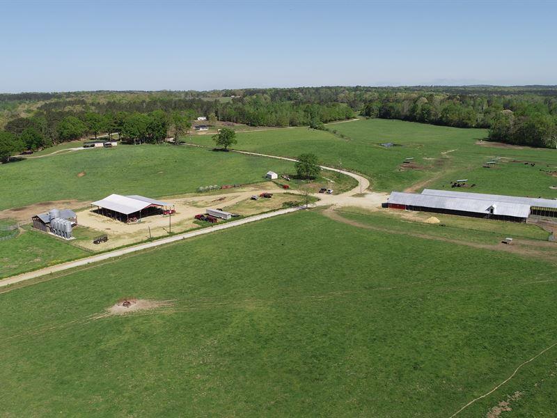 Creekside Farm-Cattle Farm In Carro : Bowdon : Carroll County : Georgia