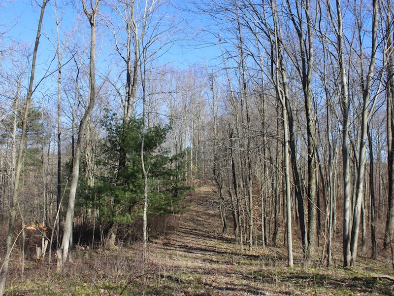 Beagle Club Rd, 20 Acres : Scio : Harrison County : Ohio