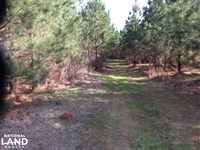 19 Acre Hunting And Timber Investme : Bolton : Hinds County : Mississippi