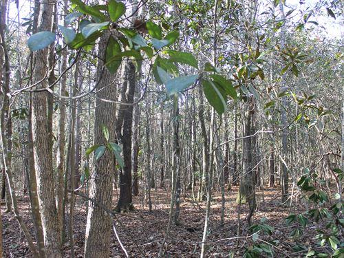Holman Creek Woods : Dawson : Terrell County : Georgia