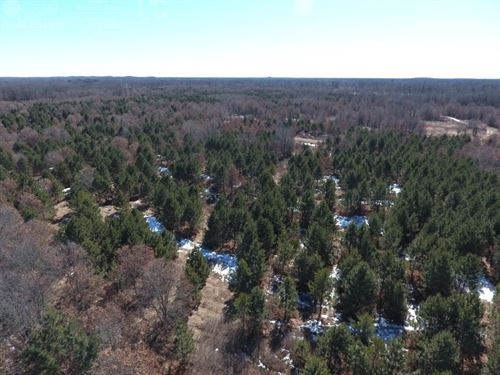 120 Ac Timber Land For Sale : Nekoosa : Adams County : Wisconsin