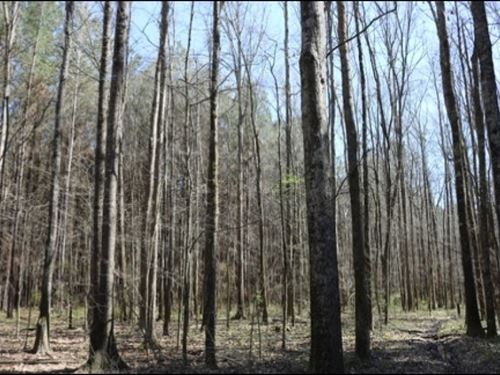 81 Acres In Leake County : Lena : Leake County : Mississippi