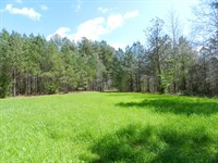 Land Investment Reduced $600/Ac : Greenville : Meriwether County : Georgia