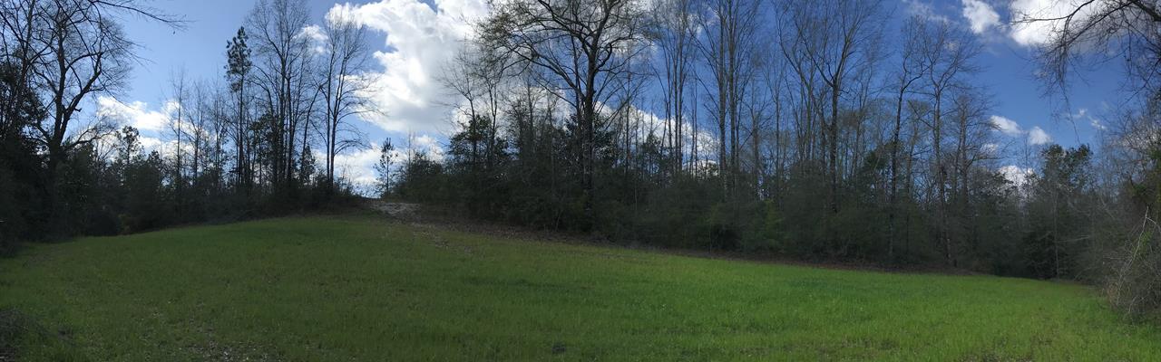 Wild Fork Creek Tract : Brewton : Escambia County : Alabama