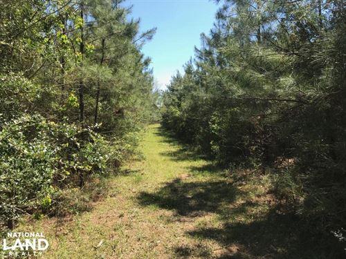Secluded Natural Regeneration Timbe : Clinton : East Feliciana Parish : Louisiana