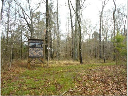 67.13 Acres In Scott County : Morton : Scott County : Mississippi