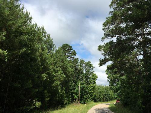 207 Acres Wheatfield Branch : Oakhurst : San Jacinto County : Texas