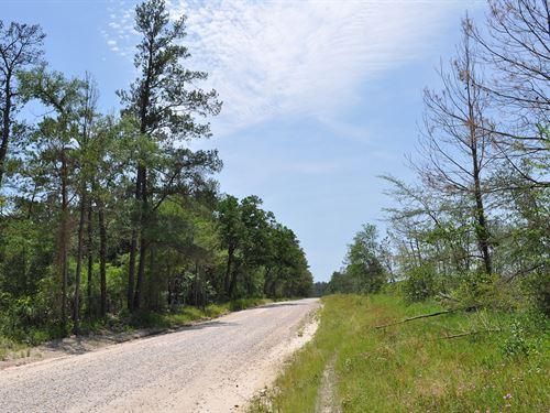 33 Acres Fm 1696 : Huntsville : Walker County : Texas
