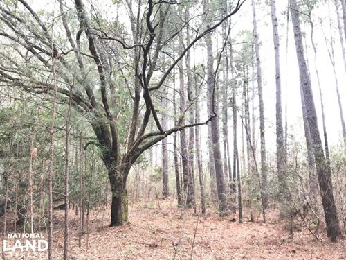 National Forest Rec Land : Jamestown : Berkeley County : South Carolina