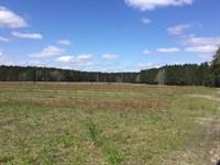 Easterlin Farm - Dove Feld, Timber : Varnville : Hampton County : South Carolina