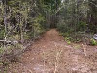 Land For Sale In Wheeler/Telfair Co : McRae : Telfair County : Georgia