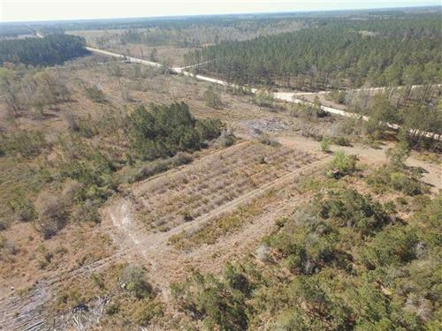 Timberland For Sale in McIntosh Co : Townsend : McIntosh County : Georgia